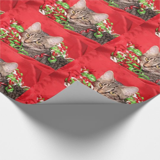 Christmas tabby kitty cat wrapping paper
