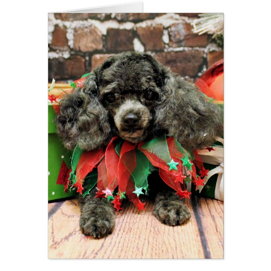 Christmas - Toy Poodle - Annie Card