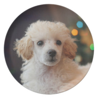 Christmas toy poodle puppy holiday plate