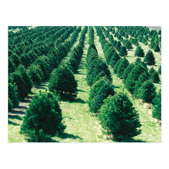 Christmas Tree Farm Postcard