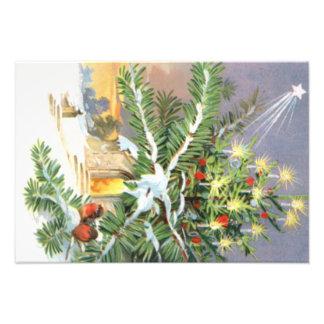 Christmas Tree Songbird Evergreen Church Photo