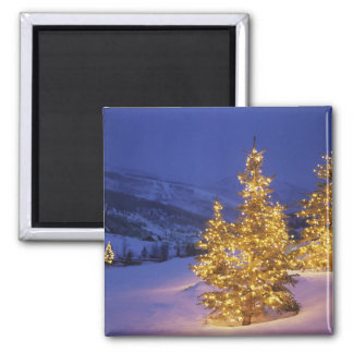 Christmas trees, Park City, Wastch Mountains, Magnet