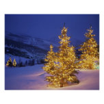 Christmas trees, Park City, Wastch Mountains, Poster