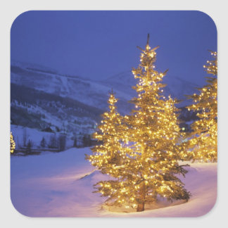 Christmas trees Park City Wastch Mountains Square Sticker