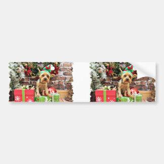 Christmas - Yorki - Teddy Car Bumper Sticker