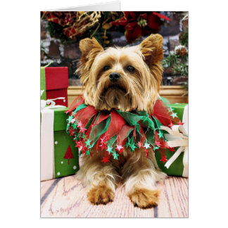 Christmas - Yorkie - Max Greeting Card