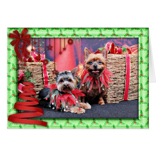 Christmas - Yorkshire Terrier - Chloe and Rocky