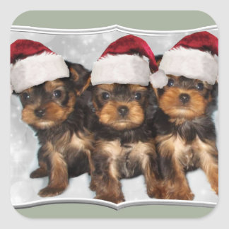 Christmas Yorkshire terrier puppies stickers