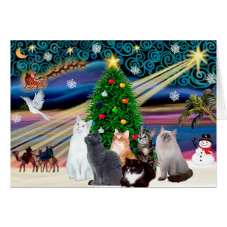 Chrstmas Magic - Six cats (variety) Greeting Card