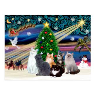 Chrstmas Magic - Six cats (variety) Post Cards