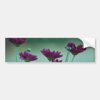 Chrysanthemum and meaning bumper sticker