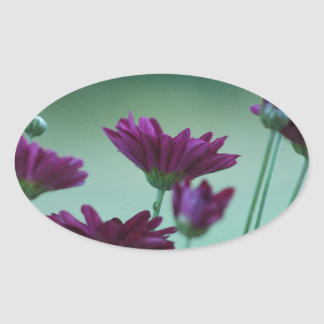 Chrysanthemum and meaning oval sticker