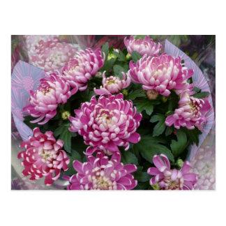 Chrysanthemum Bouquet Postcard