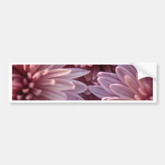 Chrysanthemum Bumper Sticker