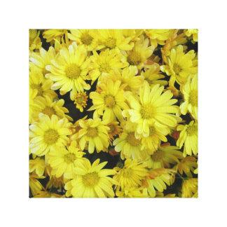 Chrysanthemum Cluster Garden Yellow Stretched Canvas Print