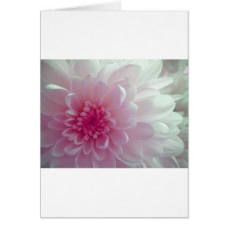 Chrysanthemum flow card
