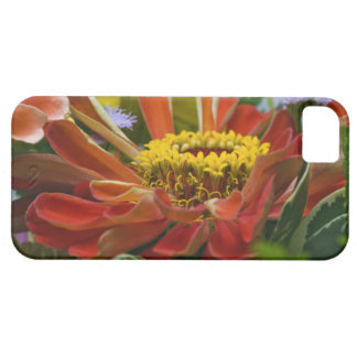 Chrysanthemum flower barely there iPhone 5 case