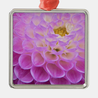 Chrysanthemum flower decorating grave site in christmas ornament