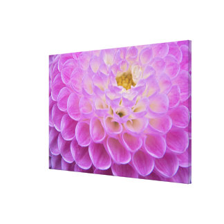 Chrysanthemum flower decorating grave site in gallery wrapped canvas