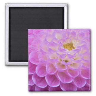 Chrysanthemum flower decorating grave site in magnet