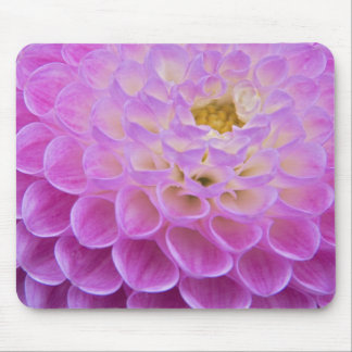 Chrysanthemum flower decorating grave site in mouse mat
