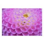 Chrysanthemum flower decorating grave site in photographic print
