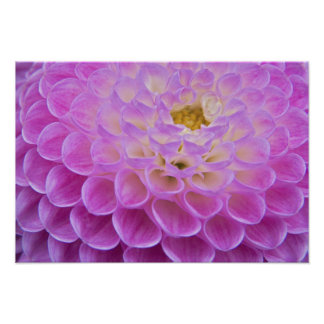Chrysanthemum flower decorating grave site in poster