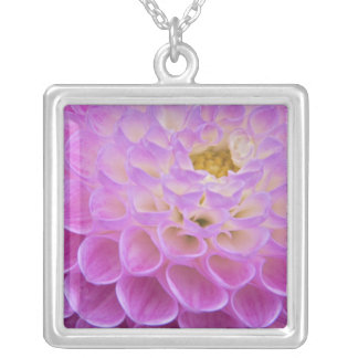 Chrysanthemum flower decorating grave site in silver plated necklace