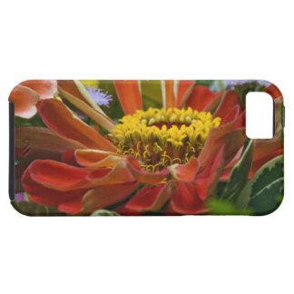 Chrysanthemum flower iPhone 5 case