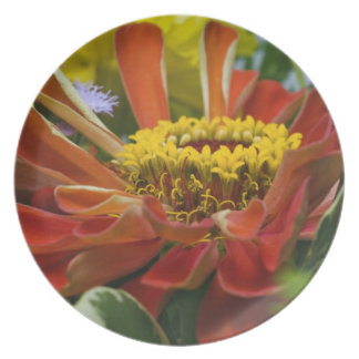 Chrysanthemum flower plate