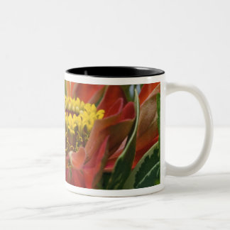 Chrysanthemum flower Two-Tone coffee mug