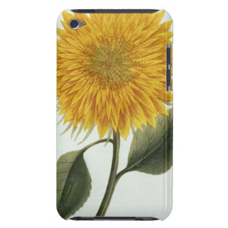 Chrysanthemum Indicum from 'Pythanthoza Iconograph Barely There iPod Case