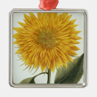 Chrysanthemum Indicum from 'Pythanthoza Iconograph Christmas Ornament