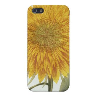 Chrysanthemum Indicum from 'Pythanthoza Iconograph iPhone 5/5S Case