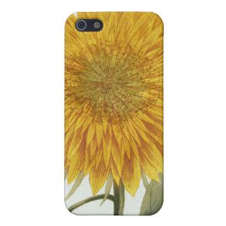 Chrysanthemum Indicum from 'Pythanthoza Iconograph iPhone 5/5S Covers