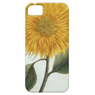 Chrysanthemum Indicum from 'Pythanthoza Iconograph iPhone 5 Cover