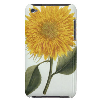 Chrysanthemum Indicum from 'Pythanthoza Iconograph iPod Touch Case-Mate Case