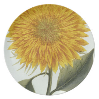 Chrysanthemum Indicum from 'Pythanthoza Iconograph Party Plate