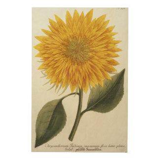 Chrysanthemum Indicum from 'Pythanthoza Iconograph Wood Wall Art