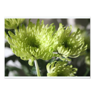 Chrysanthemum Invitation