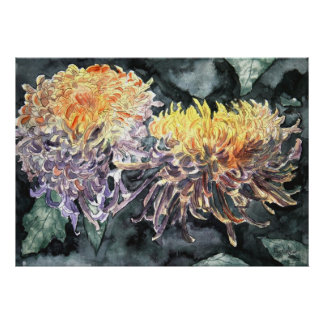 Chrysanthemum mum shasta daisy art print