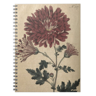 Chrysanthemum Notebooks