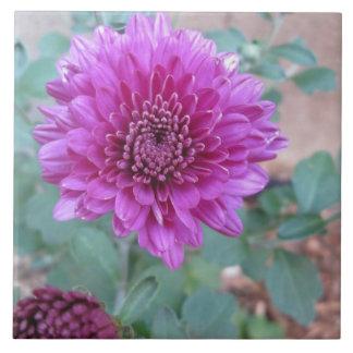 Chrysanthemum Purple Floral Ceramic Tile