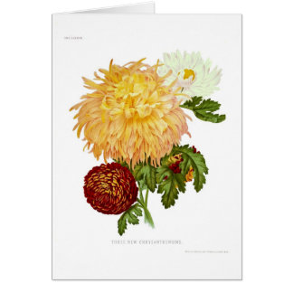 Chrysanthemums Card