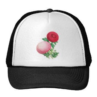 Chrysanthemums, Lady Talfourd and Purpurea Elegans Mesh Hat