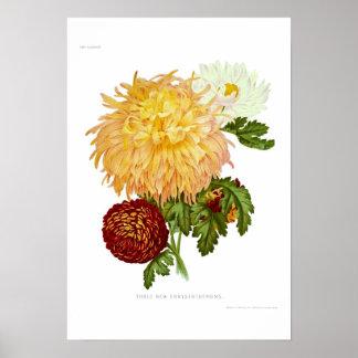 Chrysanthemums Poster