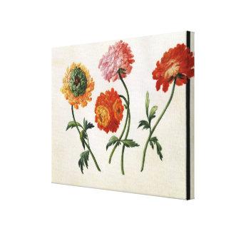 Chrysanthemums (w/c on paper) canvas print