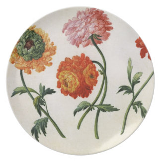 Chrysanthemums (w/c on paper) plates