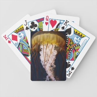 Chrysaora fuscescens,  Pacific Sea nettle Bicycle Playing Cards