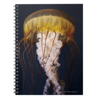 Chrysaora fuscescens,  Pacific Sea nettle Spiral Notebook